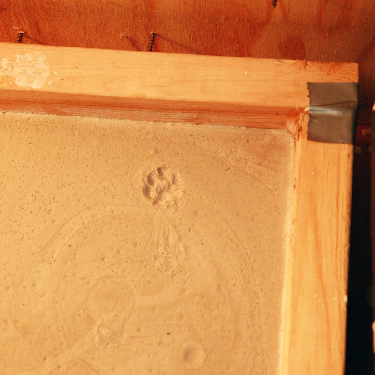 A close up view of a portion of the plaster mold, with a cat's paw print in the plaster.
