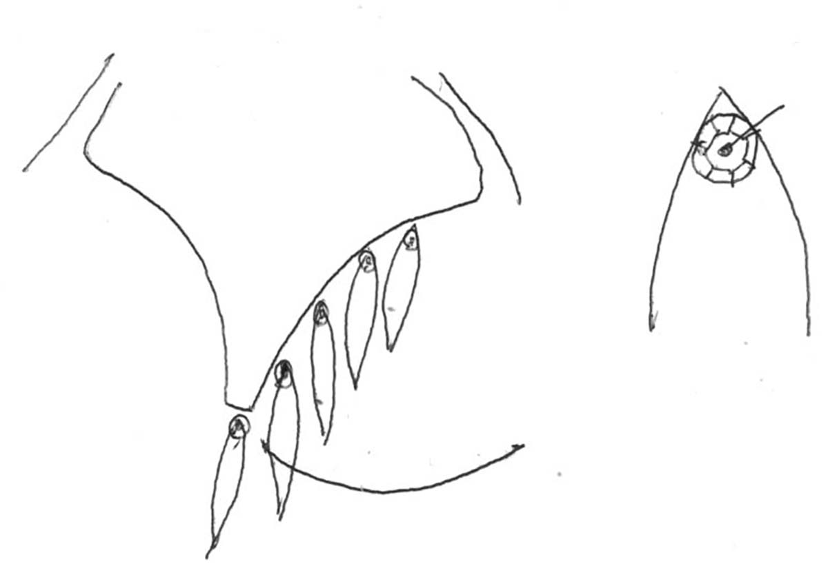 A rough hand drawn sketch showing spangles being sewn to a bra.